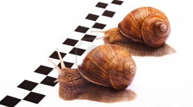 snails-racing