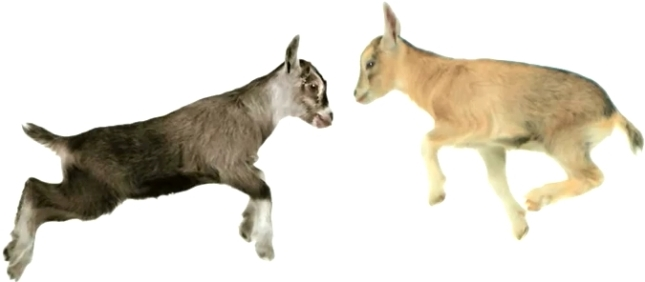 telus-goats