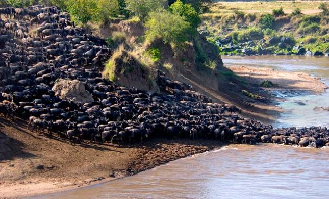 Great-Migration-Serengeti