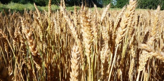 Saskatchewan: land of wheat... and innovation?